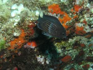 2013.vakantie.tamariu-44.JPG
