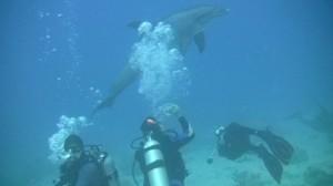 Duiken met dolfijnen
